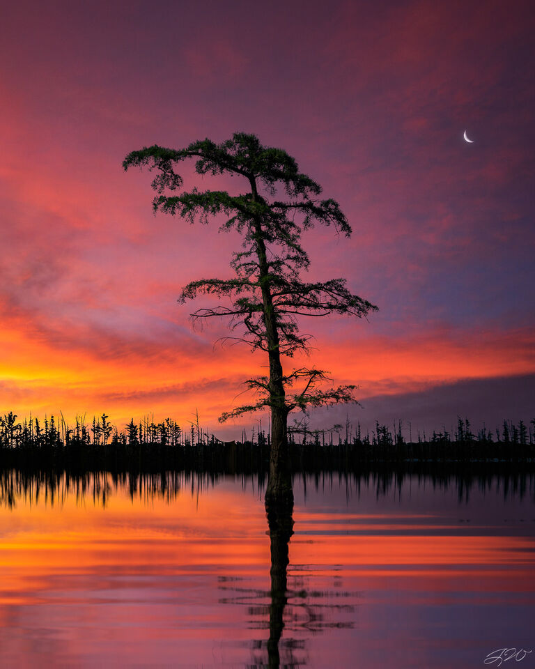 bald cypress, tree, sunset, moon, clouds, Sony Alpha, reflection, lake