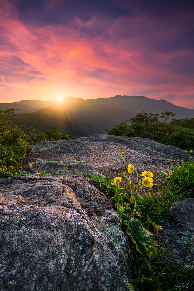 craggy garden, flower, wildflowers, sunset, mountains, landscape, colorful, focus stacking