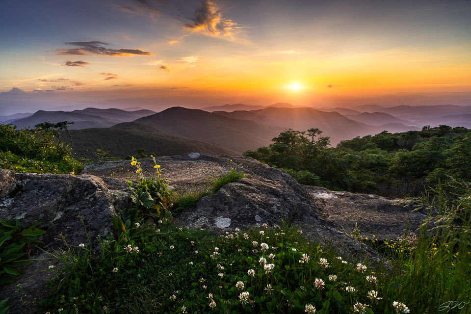 mountains, clover, flowers, craggy gardens, landscape, sunset, wildflowers, focus stacking