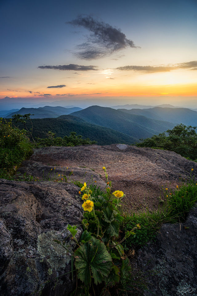 mountains, craggy garden, wildflowers, flowers, sunset, yellow primrose