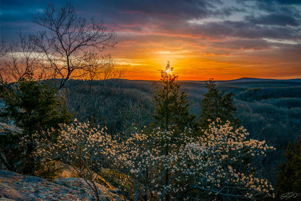 colorful, sunset, spring, tree, flower, nature, sony alpha