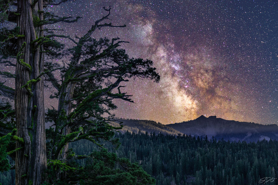 ancient juniper, tree, astrophotography, milky way, night sky, stars, surreal