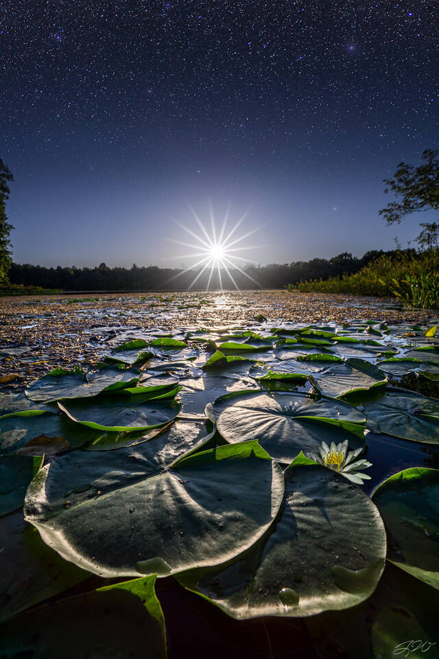 moonlight, water, lily, bloom, flower, wildflower, night sky, lily pad, stars, full moon, astrophotography, nightscape