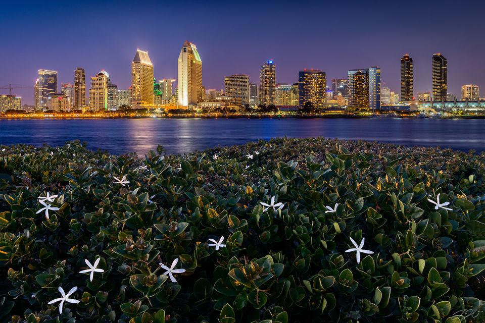 san diego, skyline, night, coronado, centennial park, flowers, focus stack, california