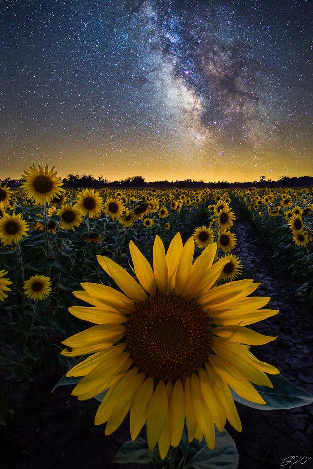 Astrophotography, Flowers, Landscape, Milky Way, Night Sky, Stars, Sunflowers, Wildflowers