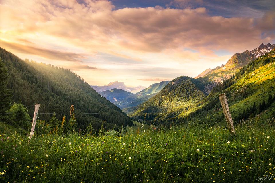 alps, europe, france, Italy, switzerland, mountains, sunset, tour du mont blanc, wildflowers, flowers