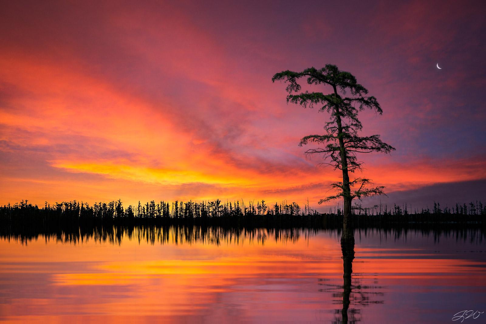 Clouds, Lake, Landscape, Moon, Reflection, Sunset, bald cypress, vibrant, photo