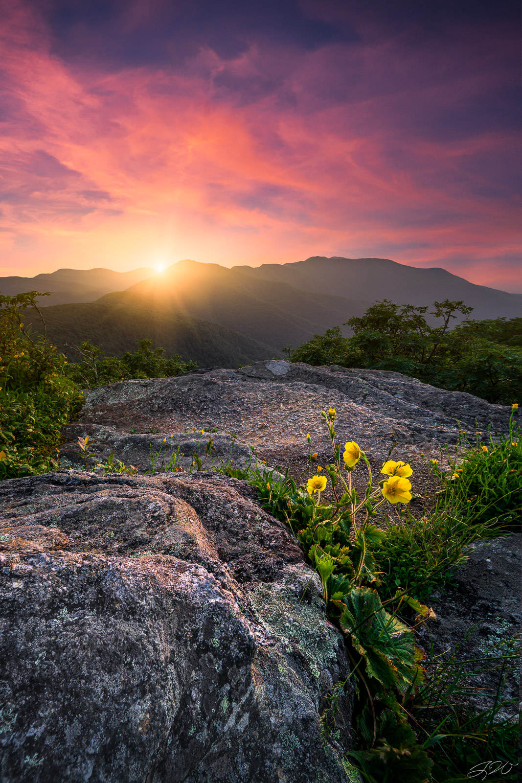 Fine Art Limited Edition of 100. A yellow primrose bathes in the warm light from the setting sun high in the mountains during...