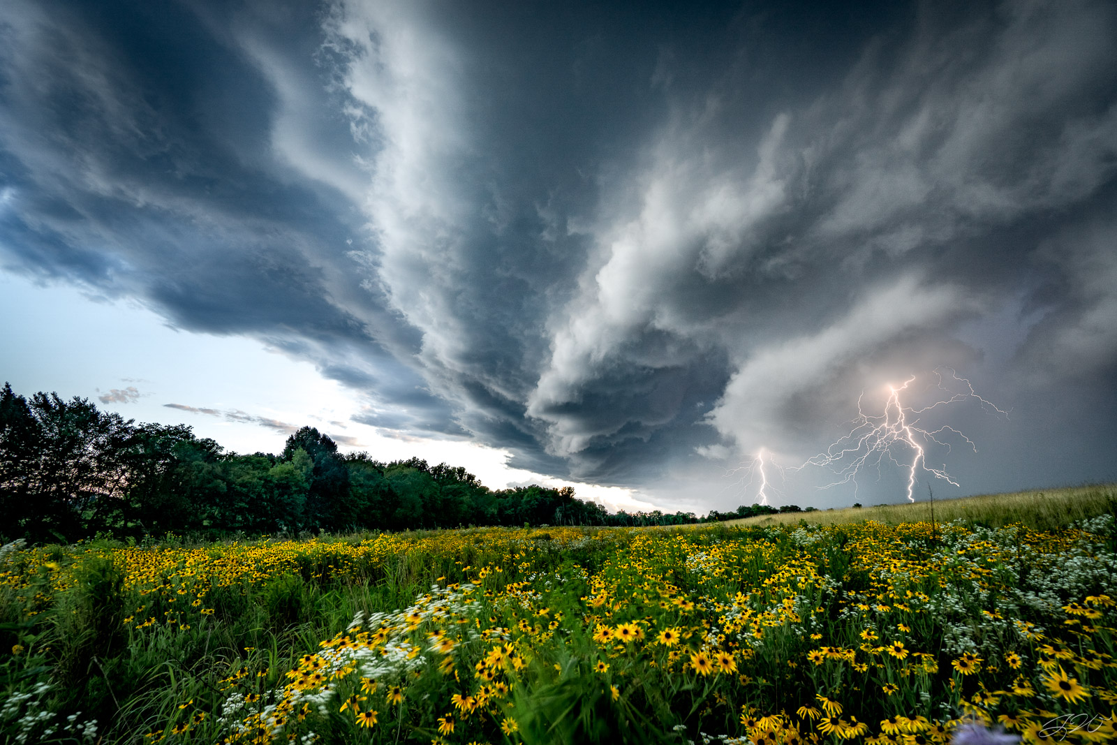 lightning, strike, shelf cloud, tornado, flower, wildflowers, storm, black eyed susan, photo
