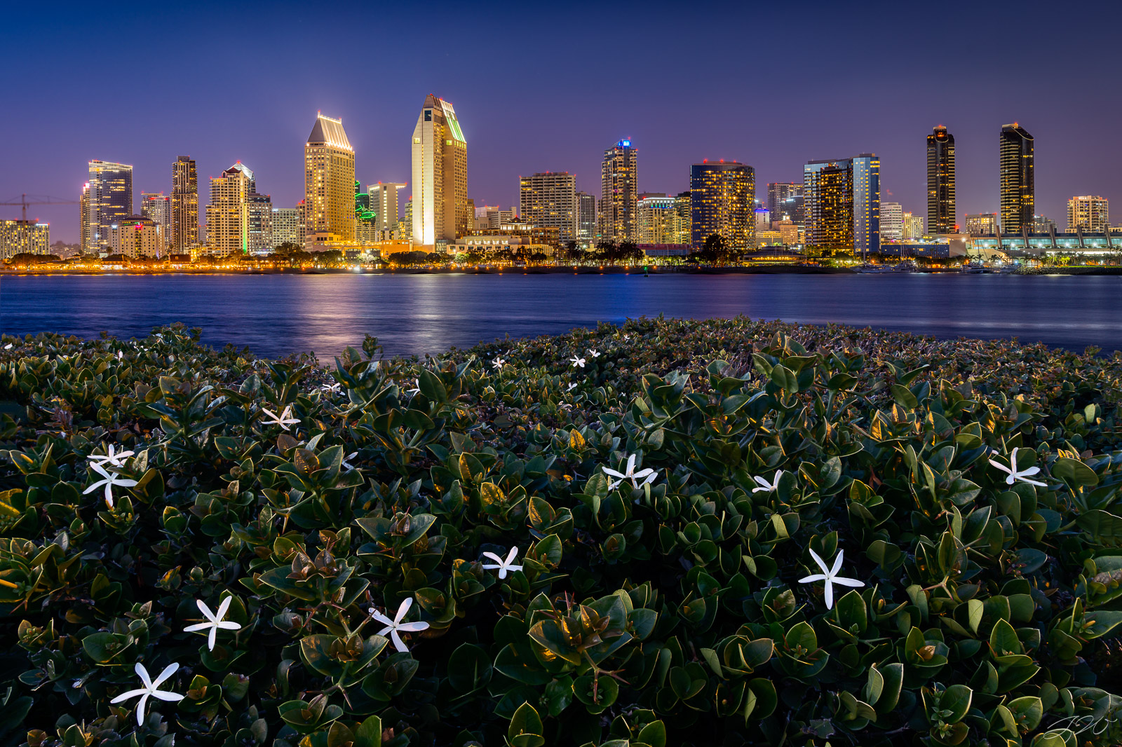 Fine Art Limited Edition of 100. A stunning image of the San Diego skyline at night. I found these beautiful flowers blooming...