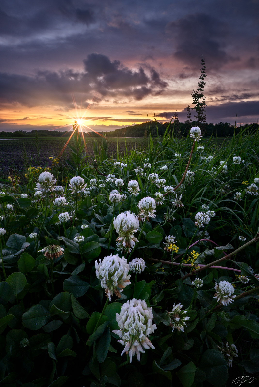 Fine Art Limited Edition of 100. A patch of white clover wildflowers leads towards the horizon during sunset. White clover is...