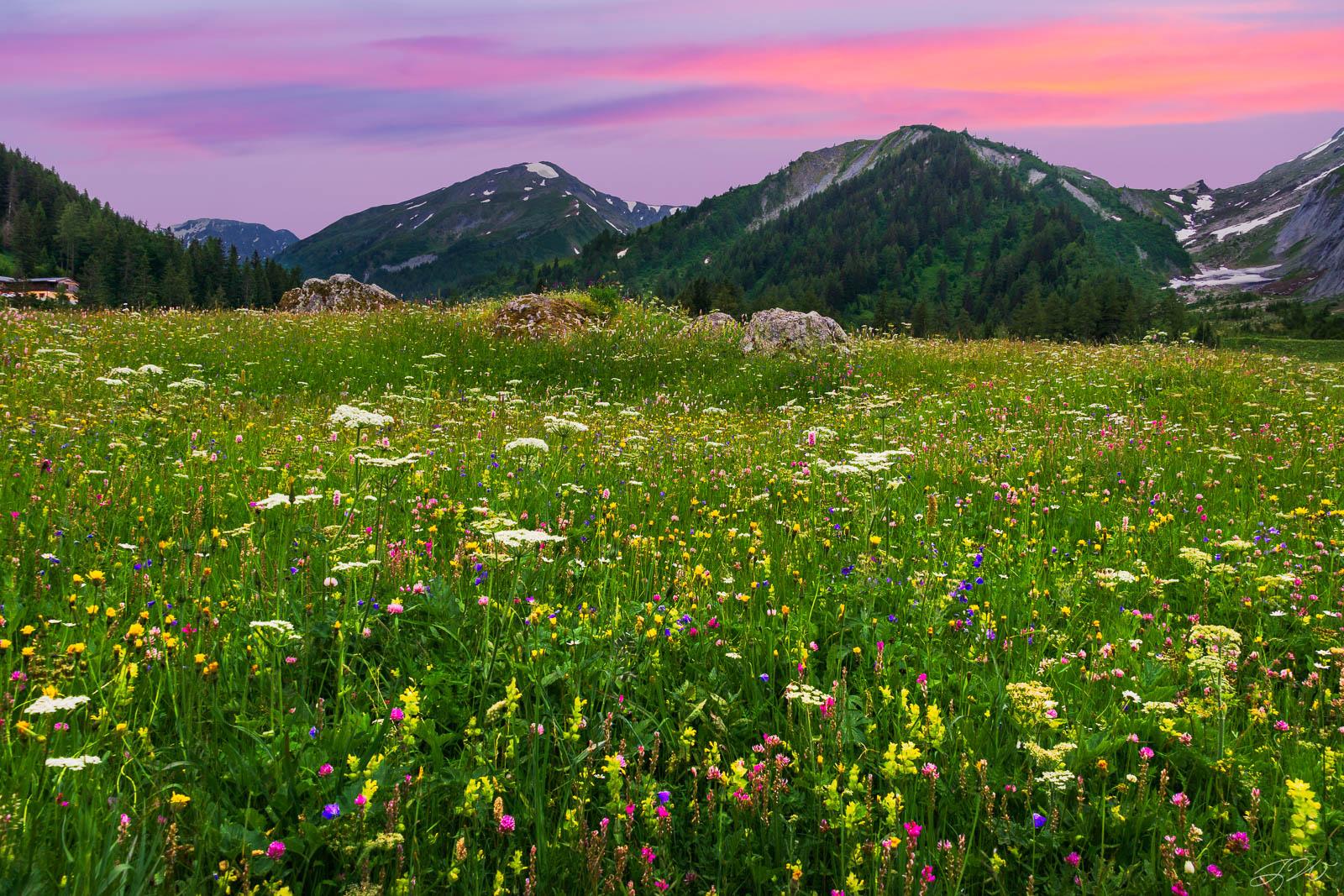 alps, europe, france, italy, switzerland, flowers, wildflowers, backpacking, sunset, tour du mont blanc, photo